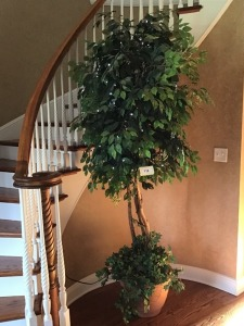 "Large Ficus Tree With Lights, Approximately 84"" With Ivy In Clay Planter"
