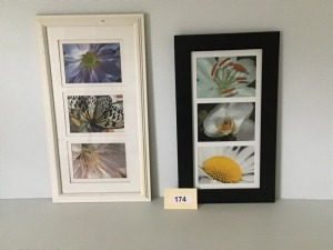 "Framed And Matted Photos Of Nature, 12"" X 22"" And 11"" X 20"""